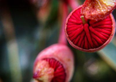 Inspire-Blooms-13