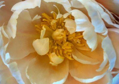 Inspire-Blooms-15