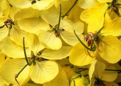 Inspire-Blooms-17