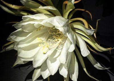 Inspire-Blooms-18