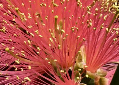 Inspire-Blooms-2