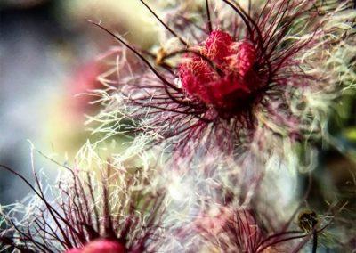 Inspire-Blooms-5