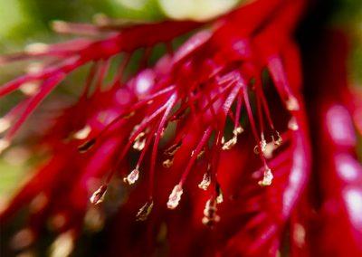 Inspire-Blooms-9