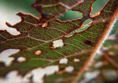 Inspire-Leaves-1