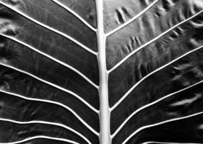 Inspire-Leaves-17