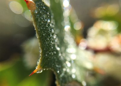Inspire-Leaves-6
