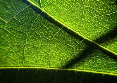 Inspire-Leaves-10