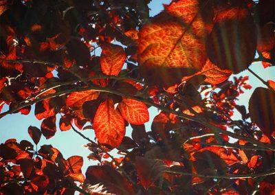 Inspire-Leaves-12