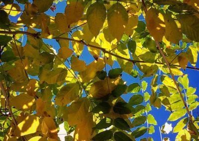 Inspire-Leaves-3